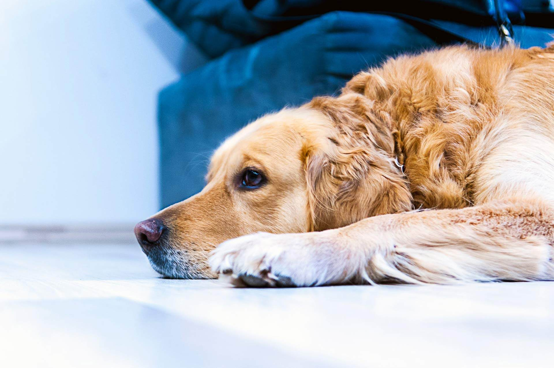 Verhalten alter Hunde: Gib auf diese Dinge Acht
