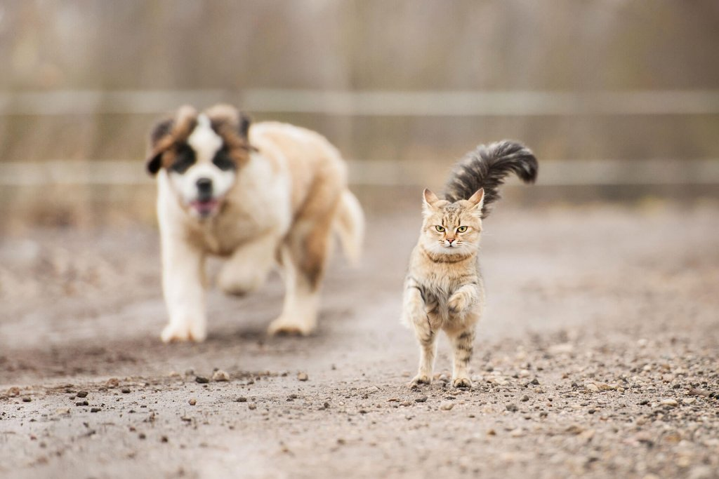 Why do dogs and cats not get along? We have the answer for you!