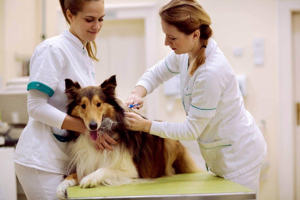 Kastrationschip Hund: Ein umfangreicher Guide klärt auf