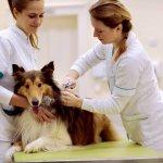 Kastrationschip beim Hund ein umfangreicher Guide