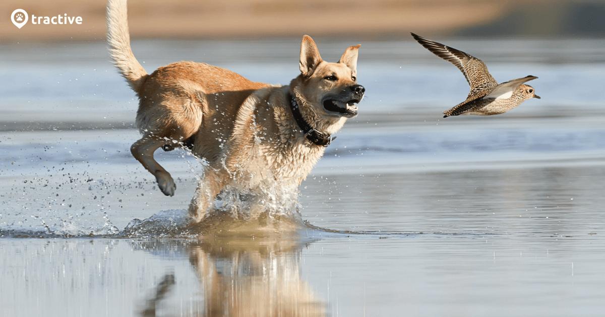 Jagdtrieb Hund - die besten Tipps