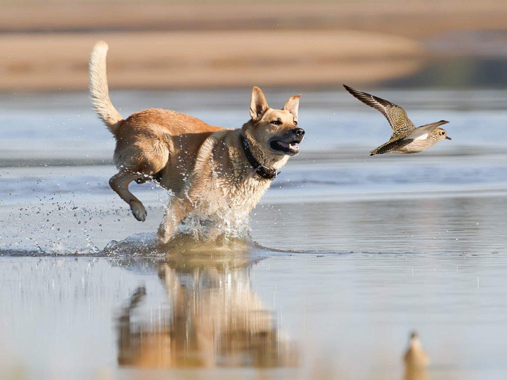 Jagdtrieb Hund: Alles was du wissen musst