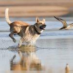 Jagdtrieb Hund - so gewöhnst du ihn 100%ig ab