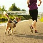 Mit Hund joggen - die besten Tipps für Hundebesitzer