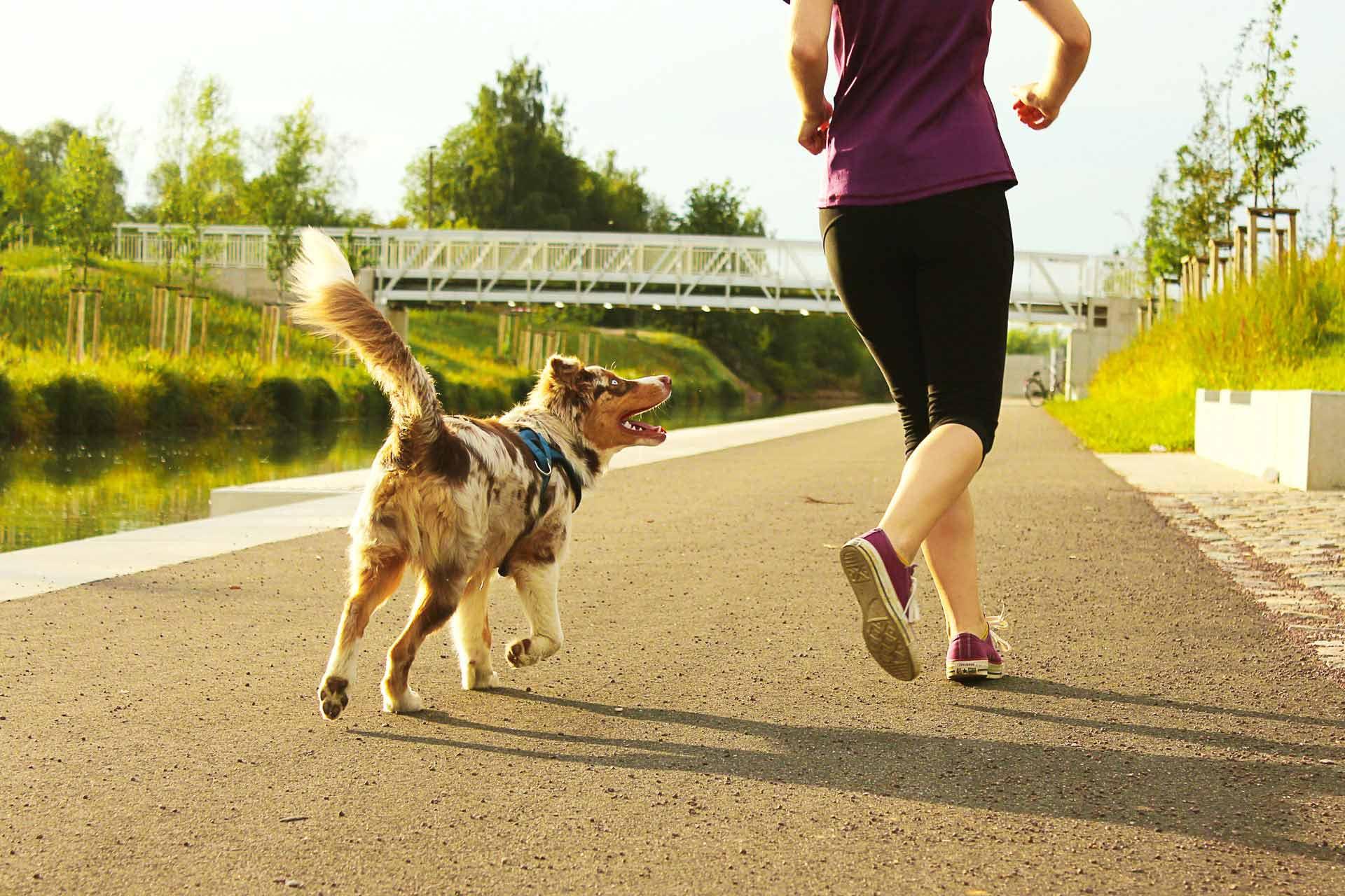 Mit Hund joggen: So bleibst du fit mit deinem Vierbeiner