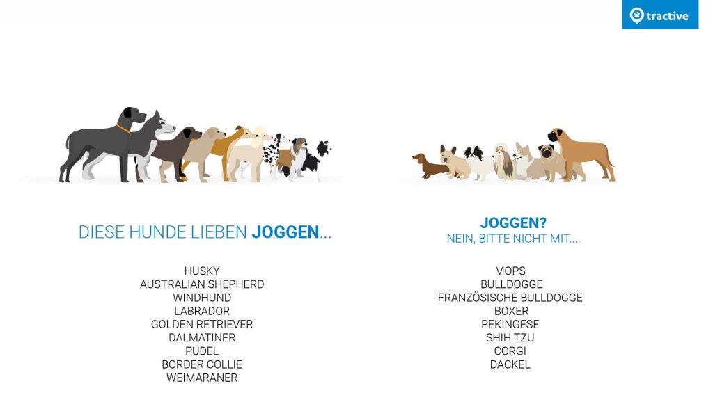 Mit Hund joggen - Übersicht über Hunde die Joggen lieben und nicht lieben