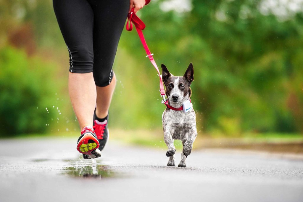 Mit Hund joggen - sicher dank Tractive GPS