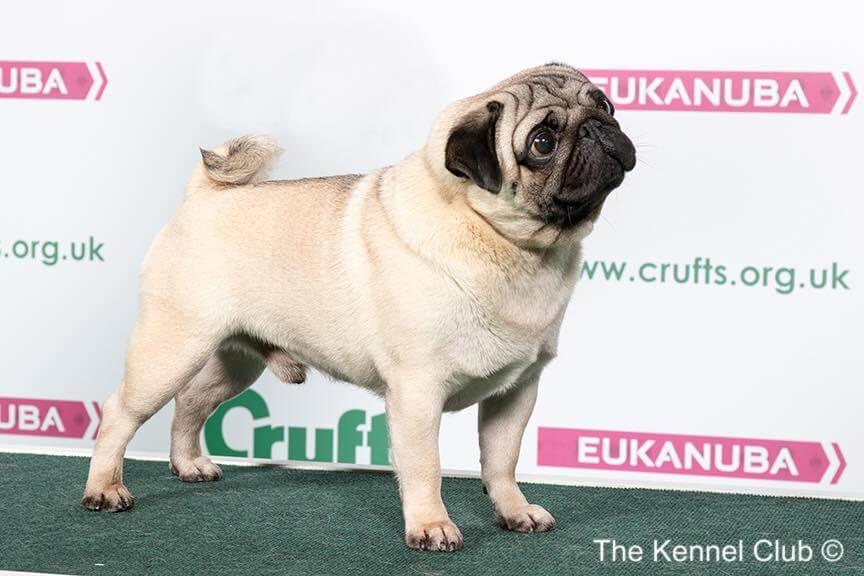Überzüchtung Hund - das kannst du dagegen tun