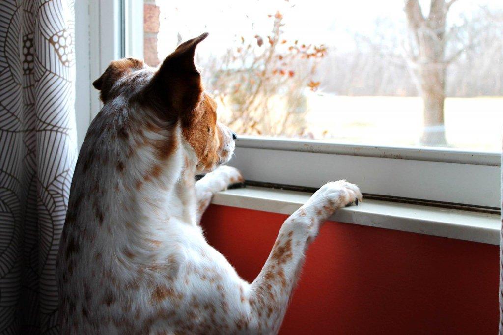Hund bleibt nicht alleine daheim - die besten Tipps damit er es lernt
