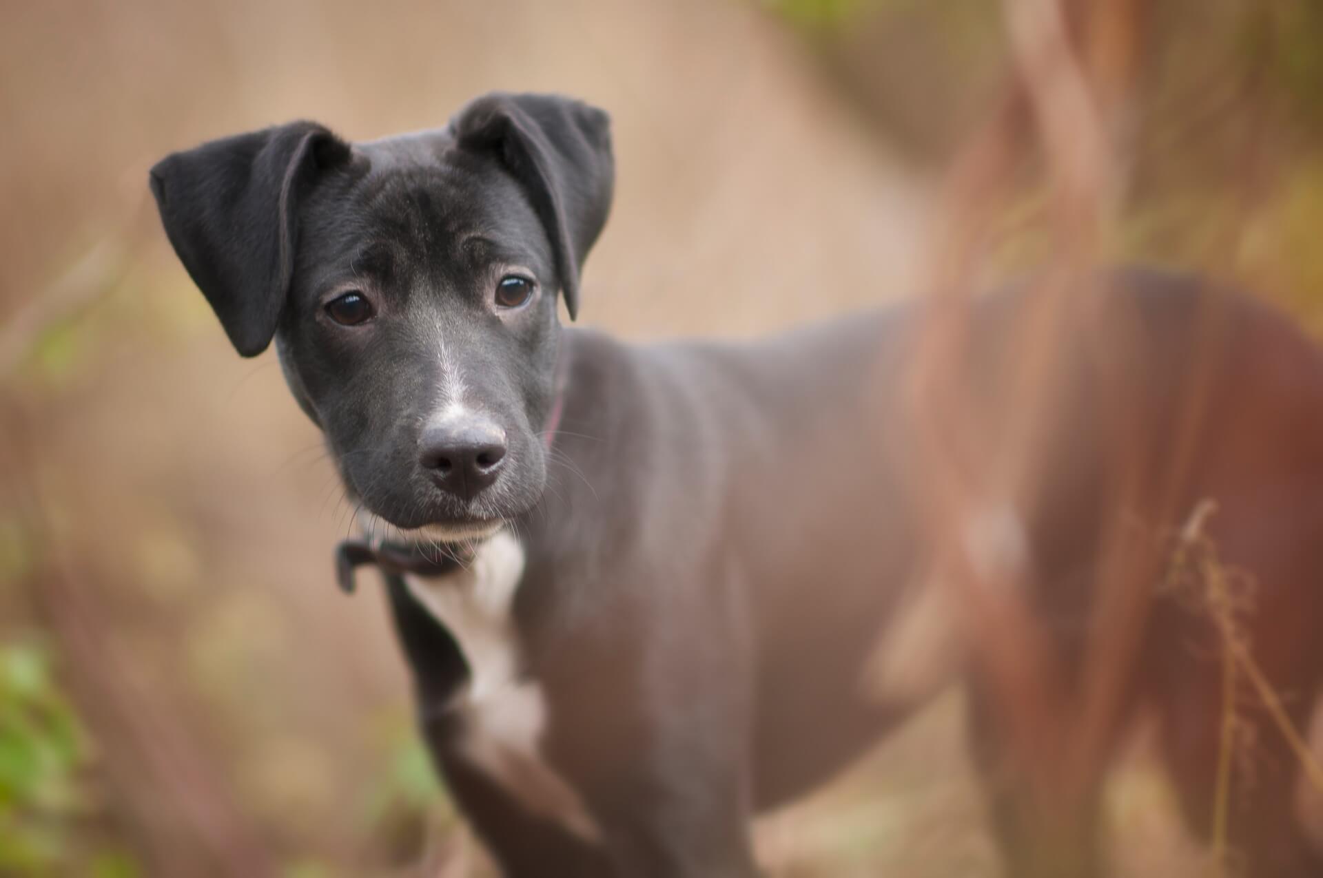 Hund bleibt nicht alleine daheim weil er ein Rudeltier ist - Gründe