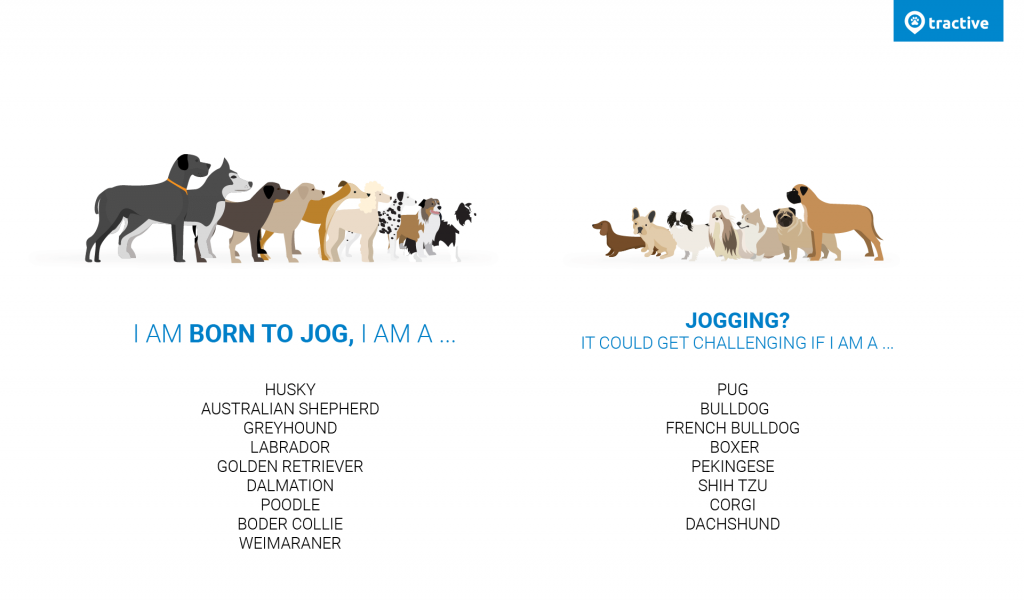 Running dog breed infographic - which dog breeds can run and which are better off not running