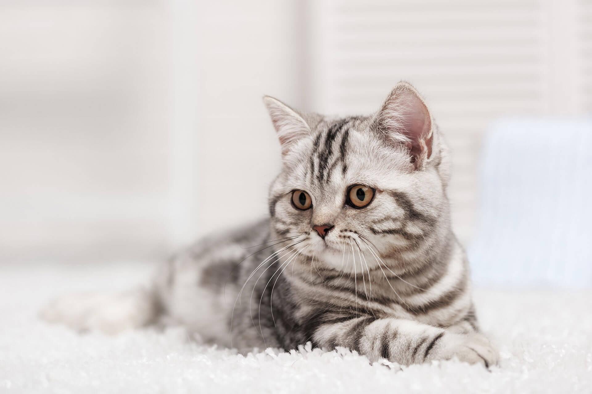 Deine Katze pinkelt plötzlich in die Wohnung? 4 Gründe & Tipps