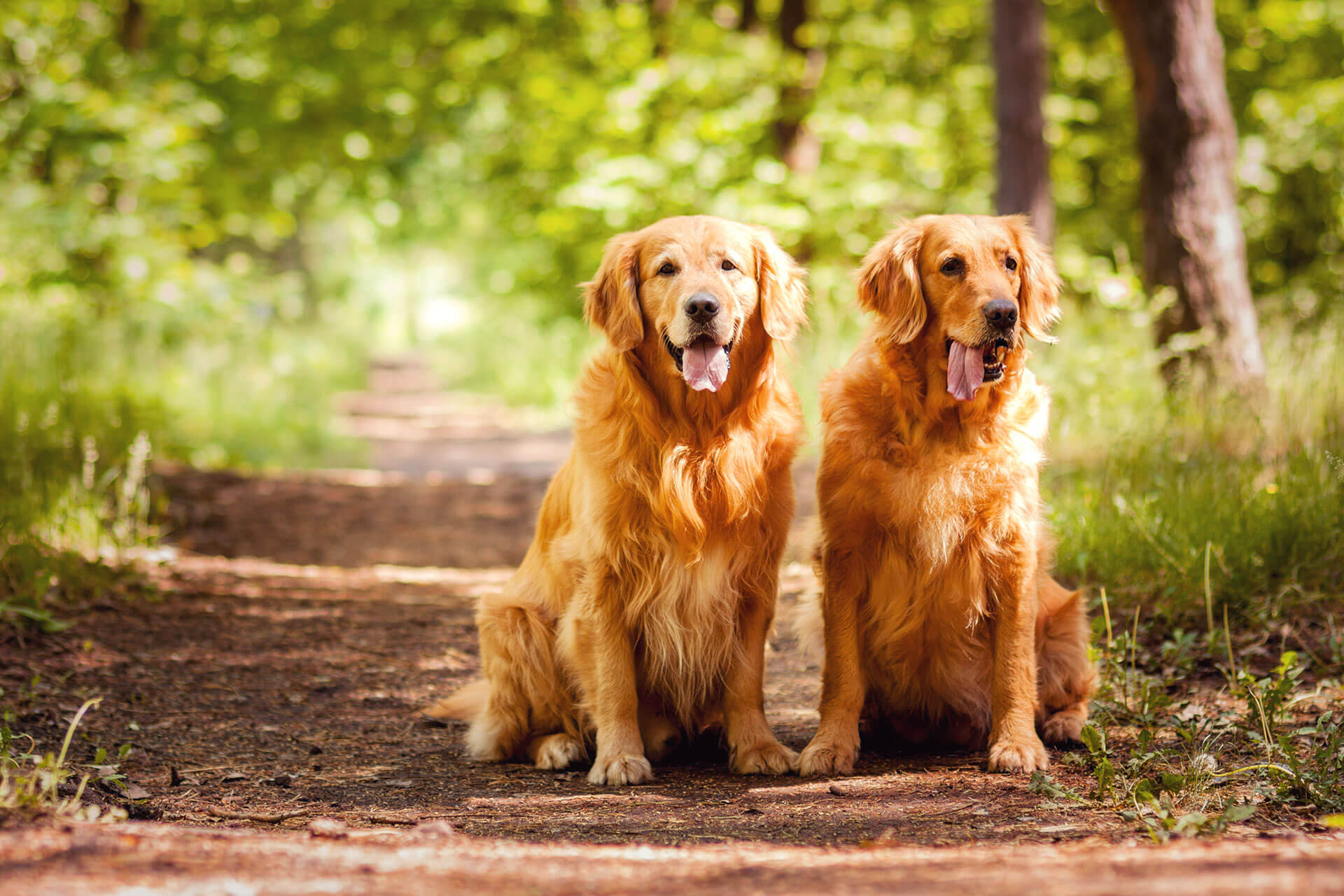 Kommunikation Hund - wie kommunizieren Hunde untereinander