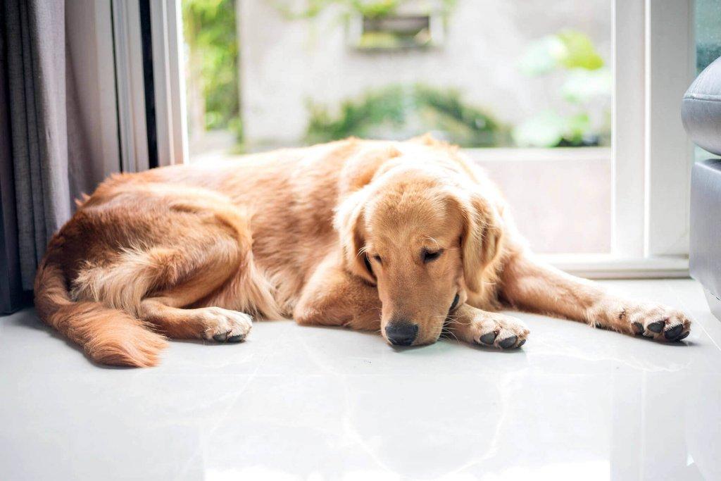 Hautkrebs bei Hunden: Alles was du wissen musst