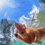 7 razas de perros que adoran el agua