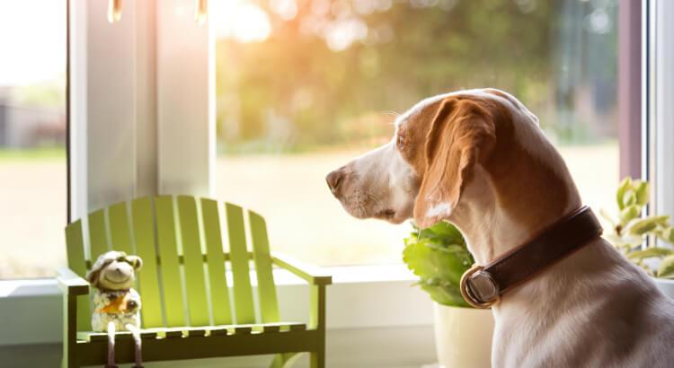 Consejos para dejar a tu perro solo