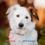Diferencias entre Microchip para perros y tractive gps