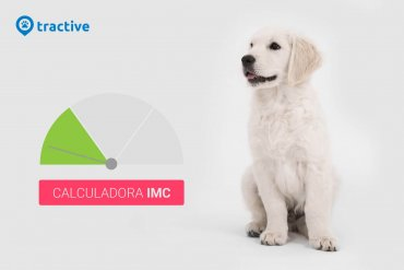 ¿El IMC de tu perro? ¡Usa esta calculadora!