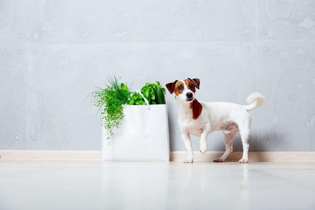 Hund vegan ernähren - Vorteile und Nachteile einer fleischlosen Ernährung