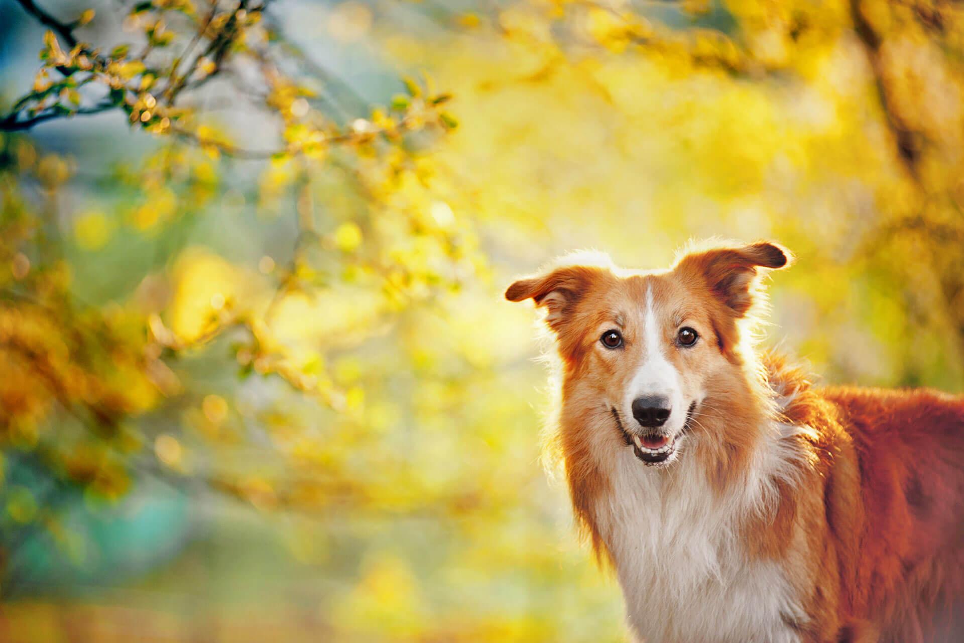 Pero ¿qué es el IMC de tu perro?, ¿por qué es tan importante?