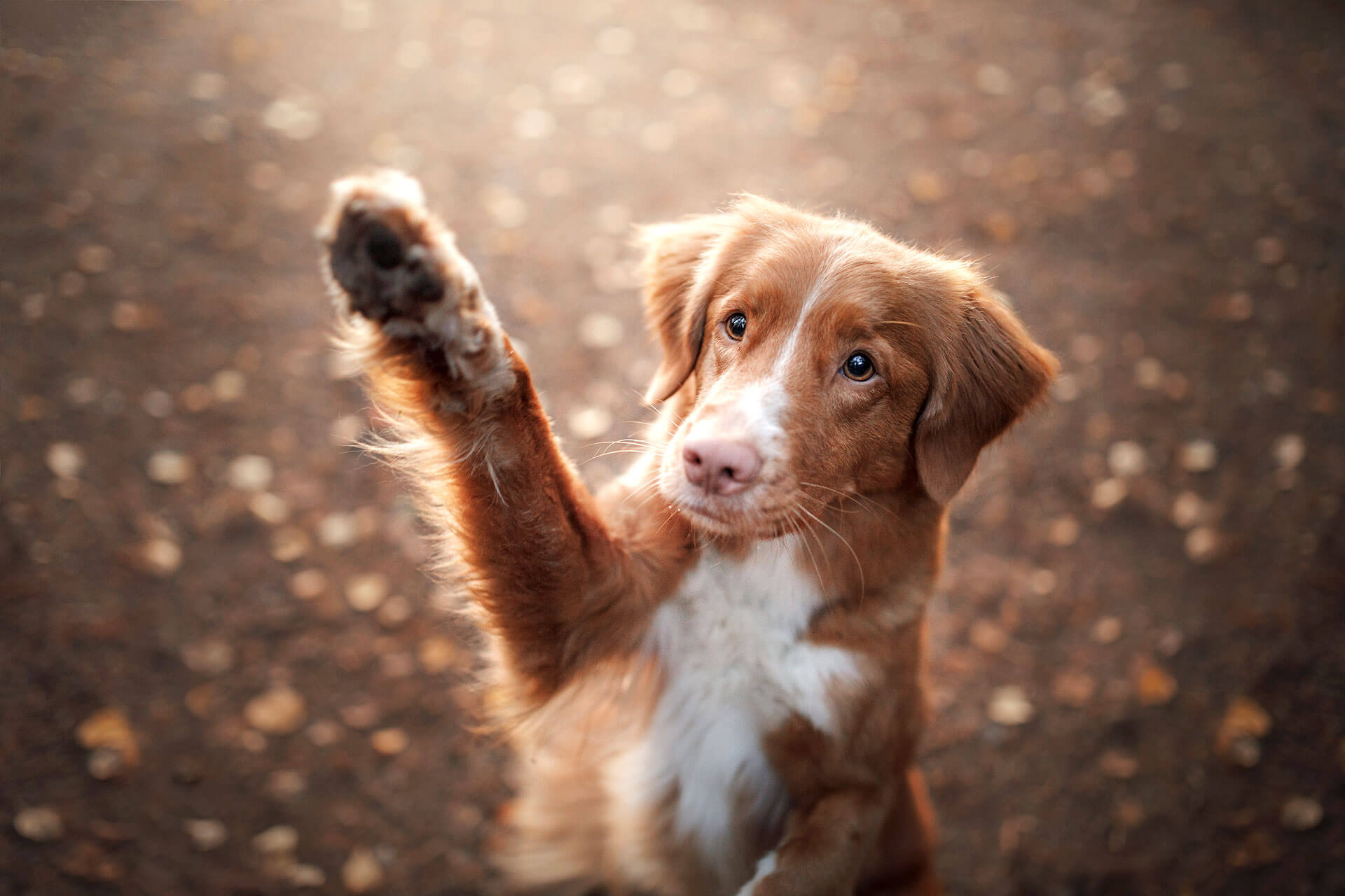 How to teach your dog the most important dog commands