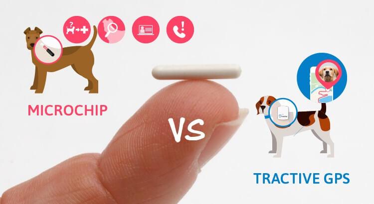 Microchip para perros y Tractive GPS: Las diferencias