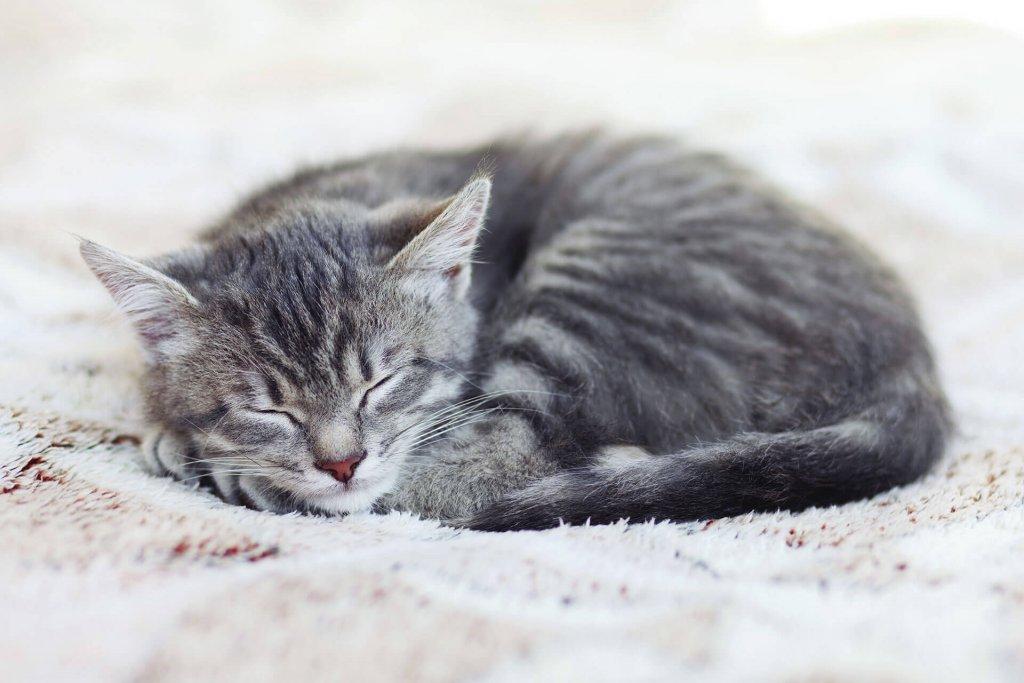 Ab wann Katzen impfen - welche Impfungen werden für Katzen empfohlen