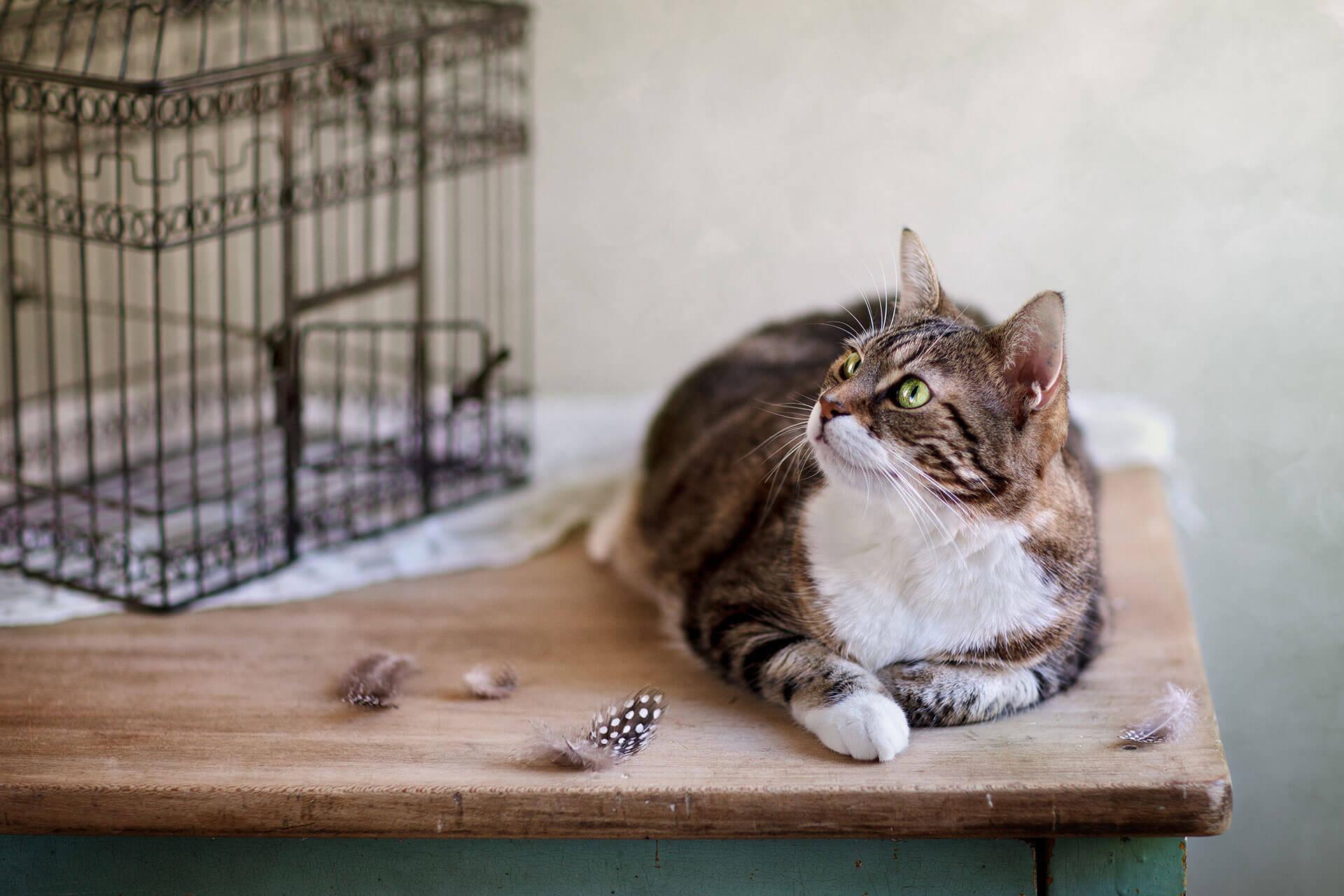 Die besten Tipps, damit du Vögel vor Katzen schützen kannst