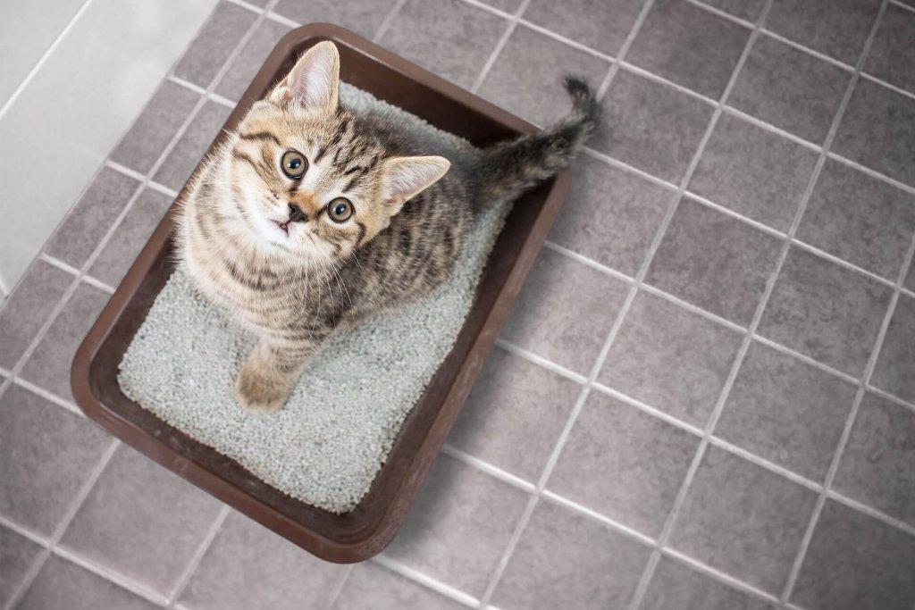 Katze pinkelt plötzlich in die Wohnung - was stimmt nicht mit der Katzentoilette