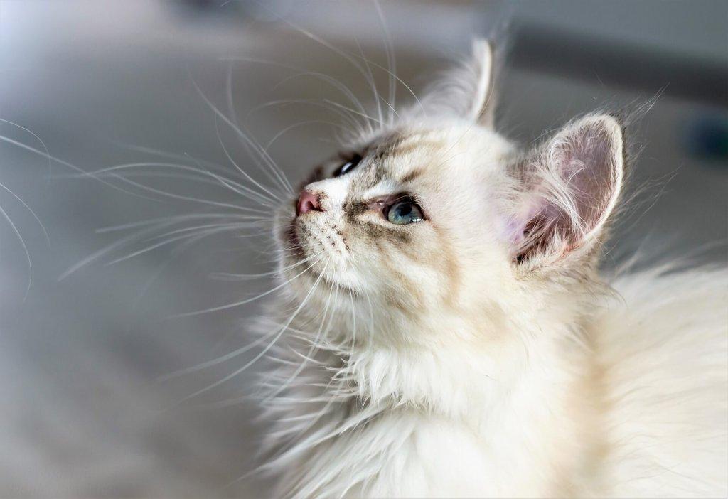 Katzen suchen sich ihre Menschen aus: Erfahre warum