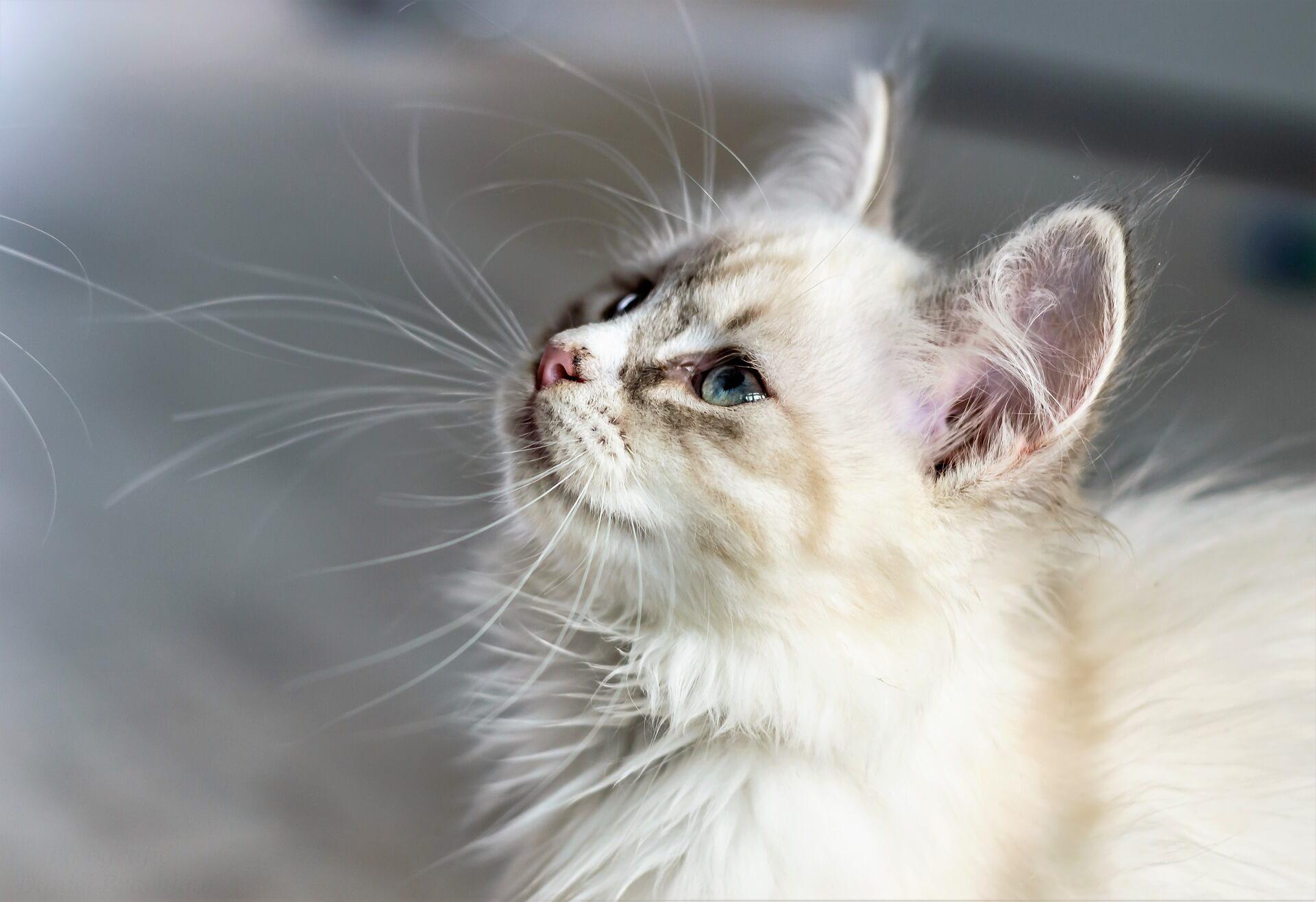 Katzen suchen sich ihre Menschen aus - Gründe und Massnahmen
