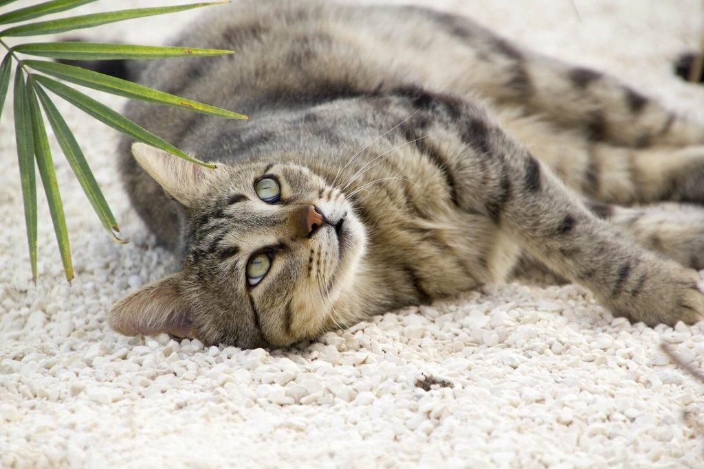 Vögel vor Katzen schützen - wie kannst du den Jagdtrieb abstellen