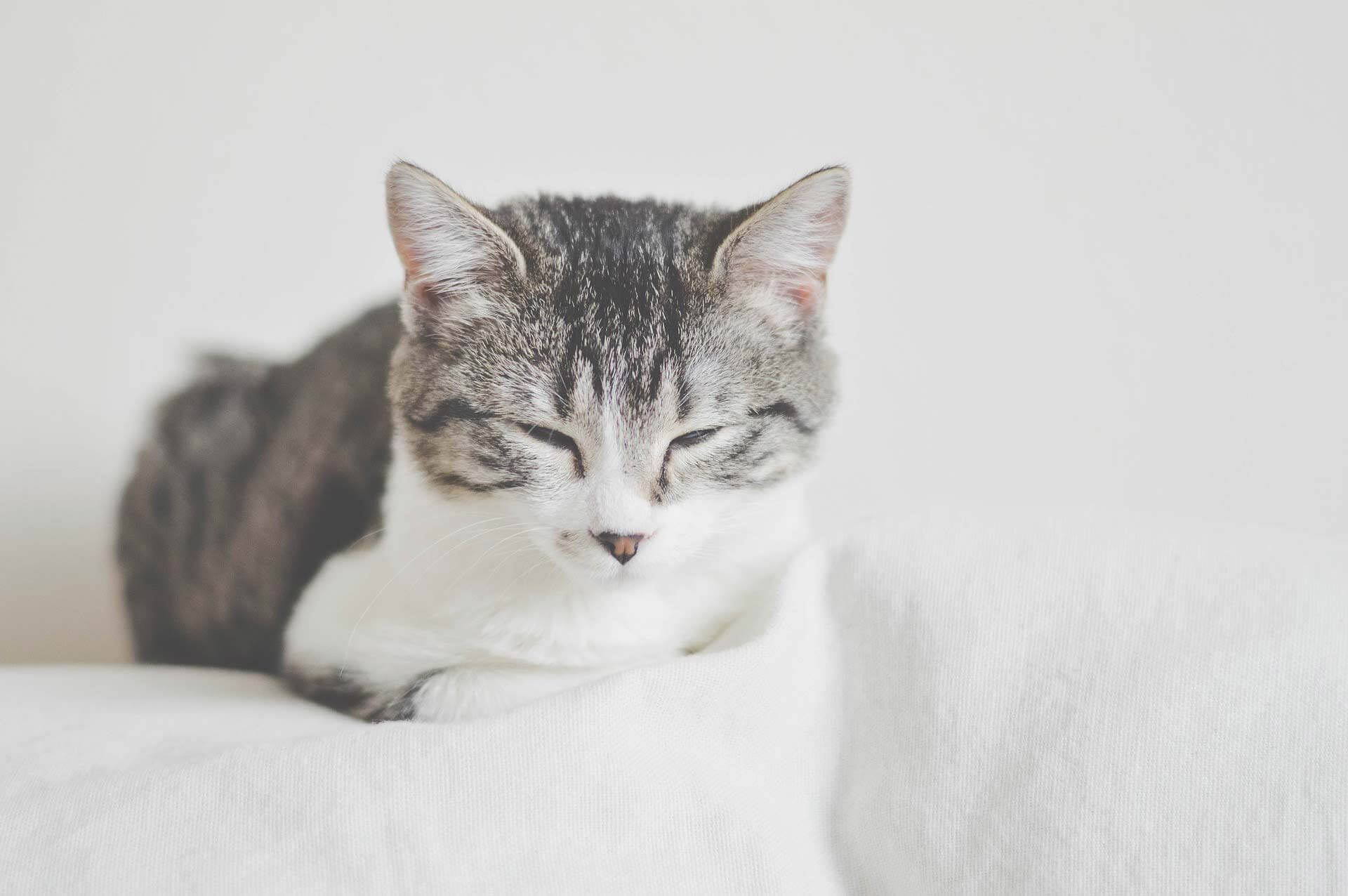 3 must do's to protect your cat when you are moving to a new home