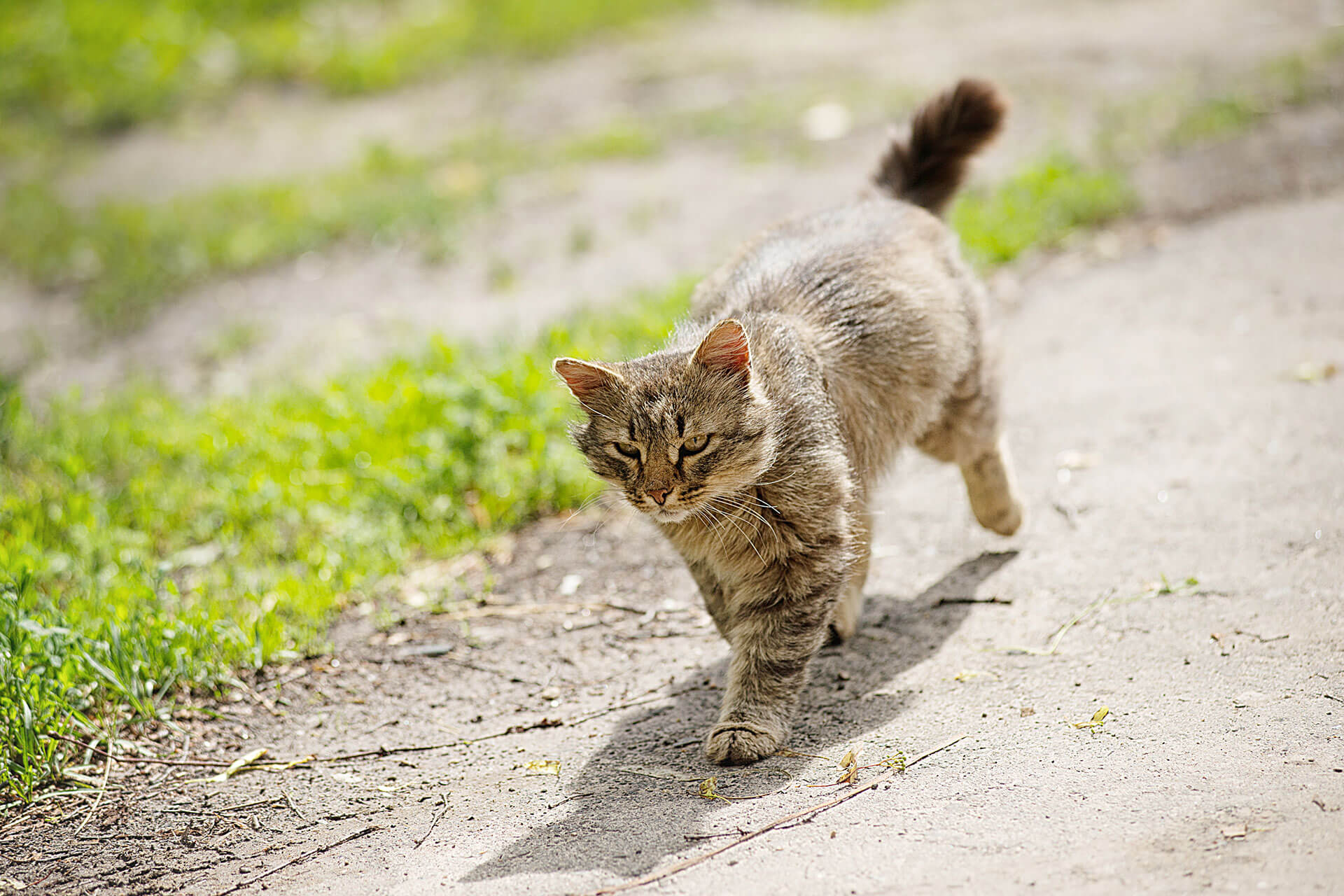 Cat sense of direction: How cats always find their way home