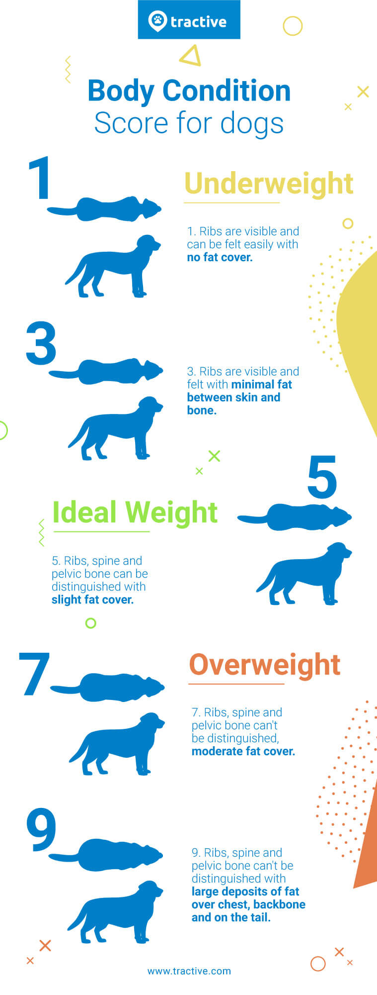 body condition score chart for dogs - infographic for overweight dogs