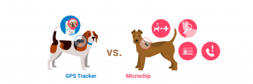 Differences between dog microchips and GPS trackers for dogs