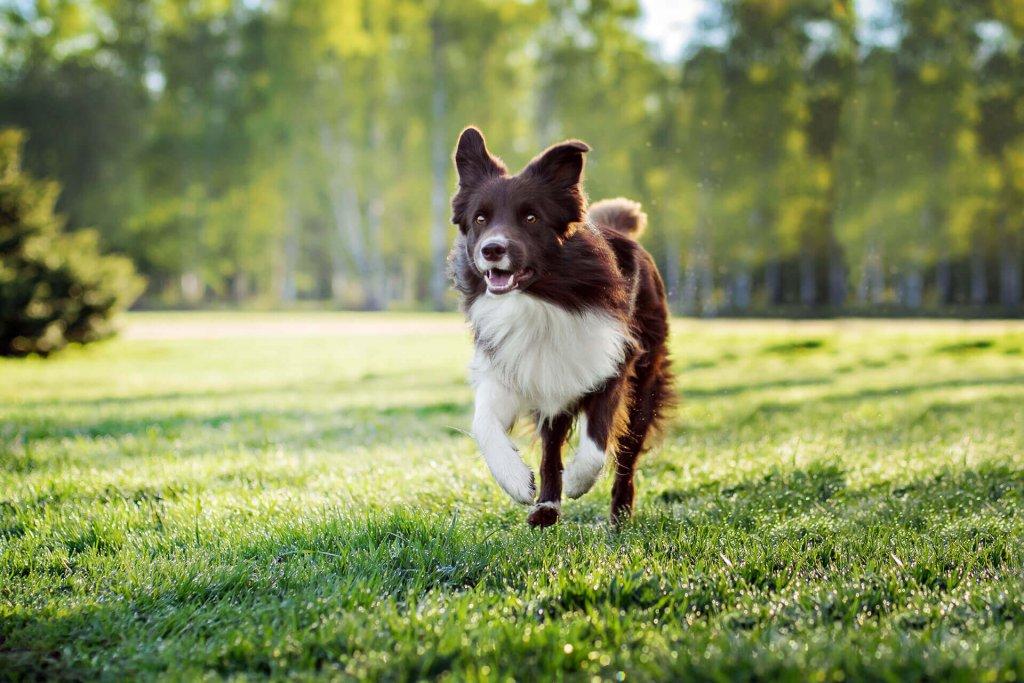 Dein Hund läuft weg? Die 6 häufigsten Gründe & wie du es vermeidest