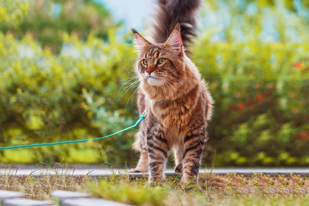 Katze an Leine gewöhnen: So funktioniert's