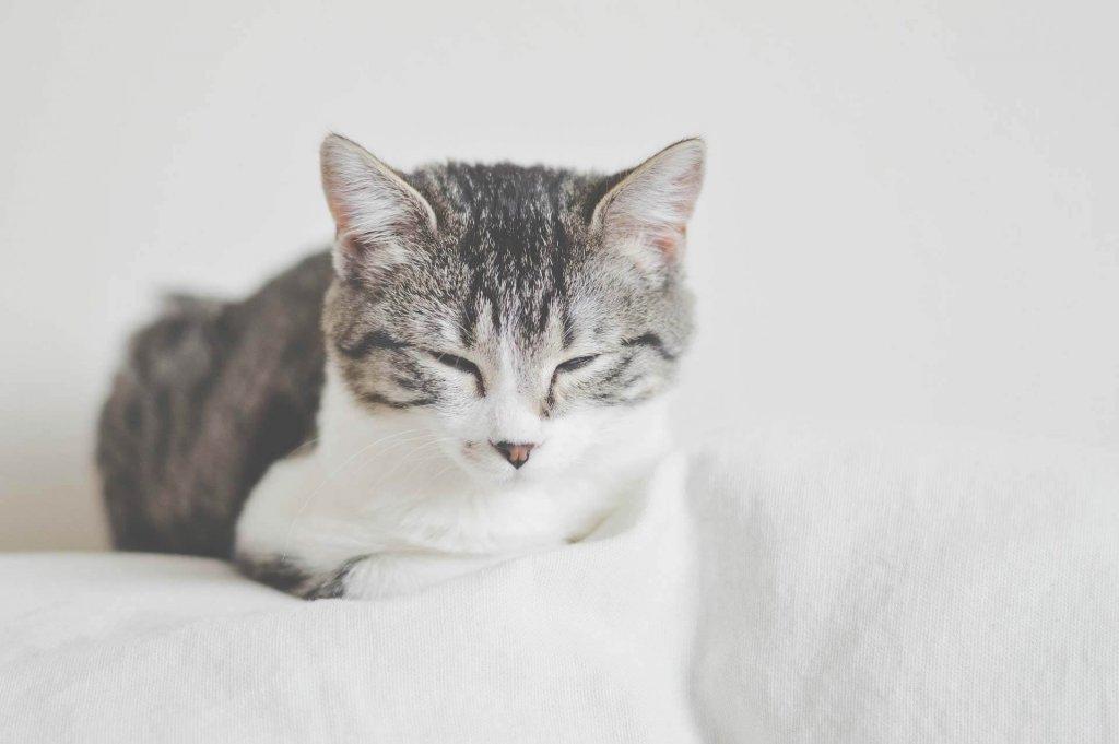 Katze an neues Zuhause gewöhnen: Checkliste, damit es deiner Katze an nichts fehlt