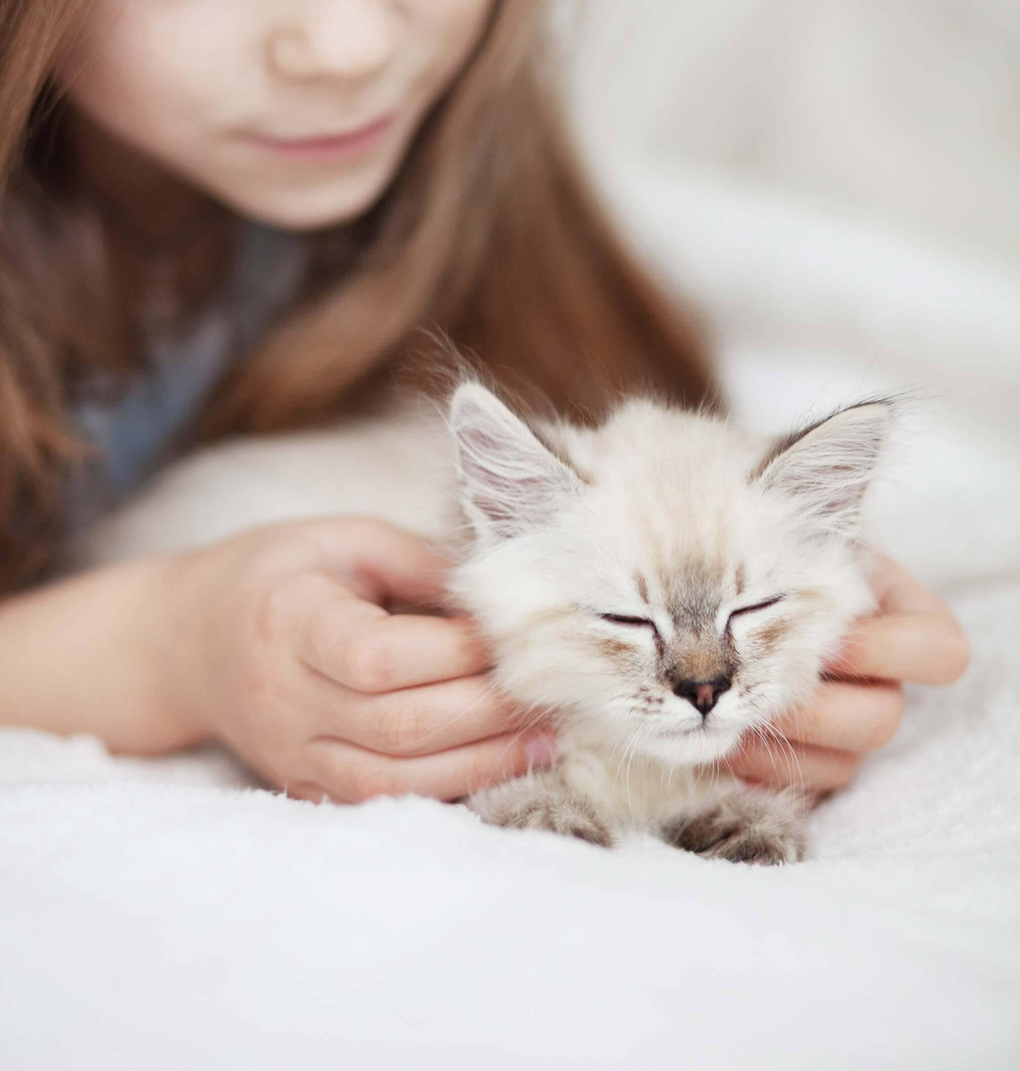 Katze an neues Zuhause gewöhnen: So geht's!