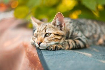 Tips for letting your cat outside for the first time