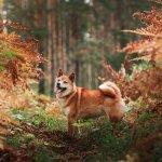 pets body condition score health check