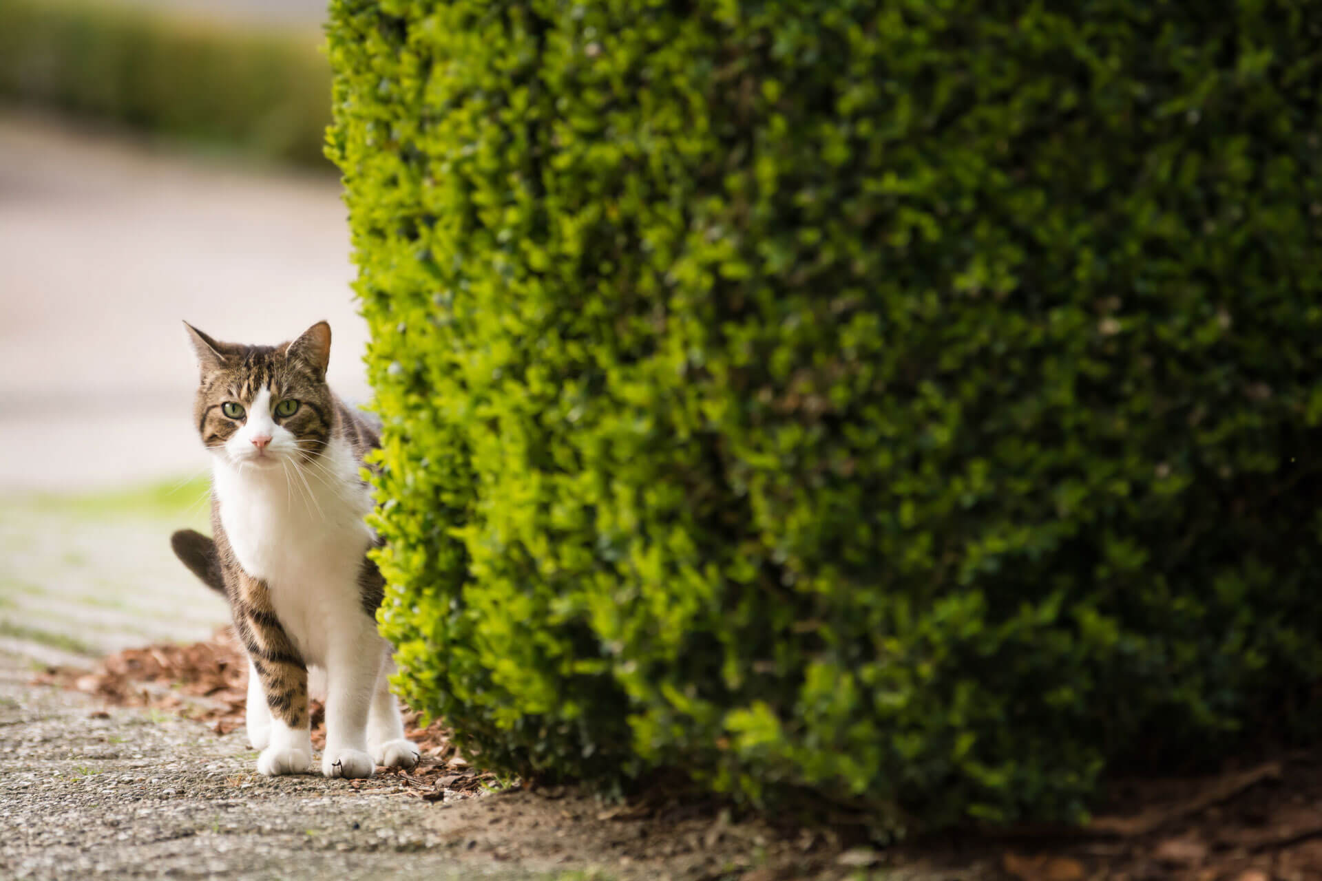 How to find a lost cat – and stop them from going missing again