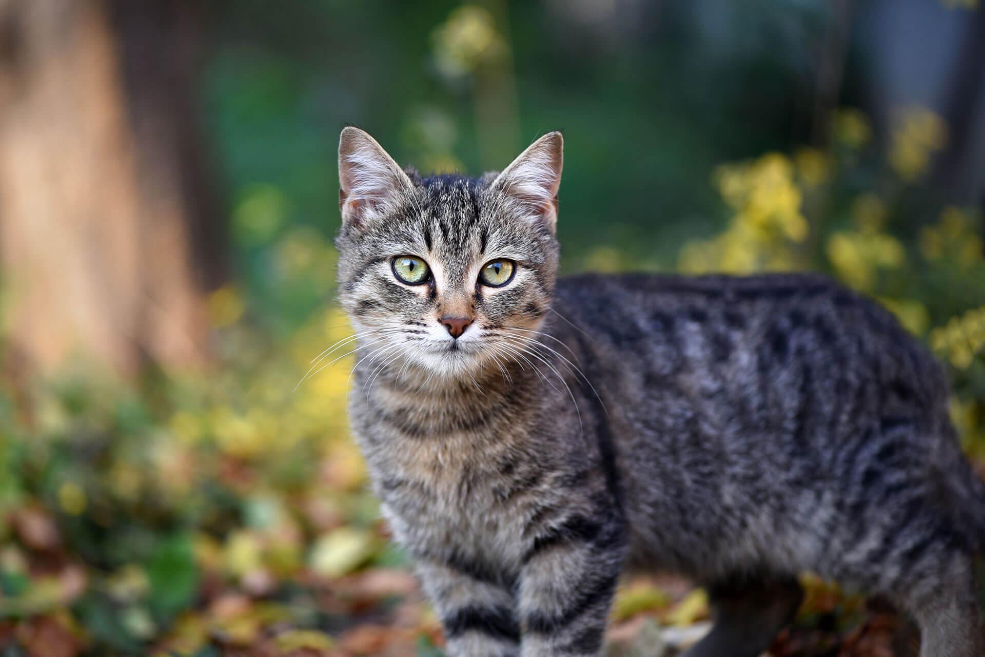 Sind dir diese Dinge bewusst, wenn du deine Katze an den Freigang gewöhnen willst