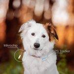 Unterschiede zwischen Hundechip und Tractive GPS Trackers für Hunde