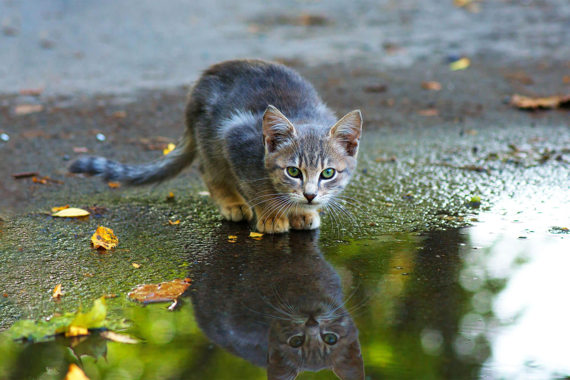 Warum sind Katzen wasserscheu? Ursachen und hilfreiche Tipps