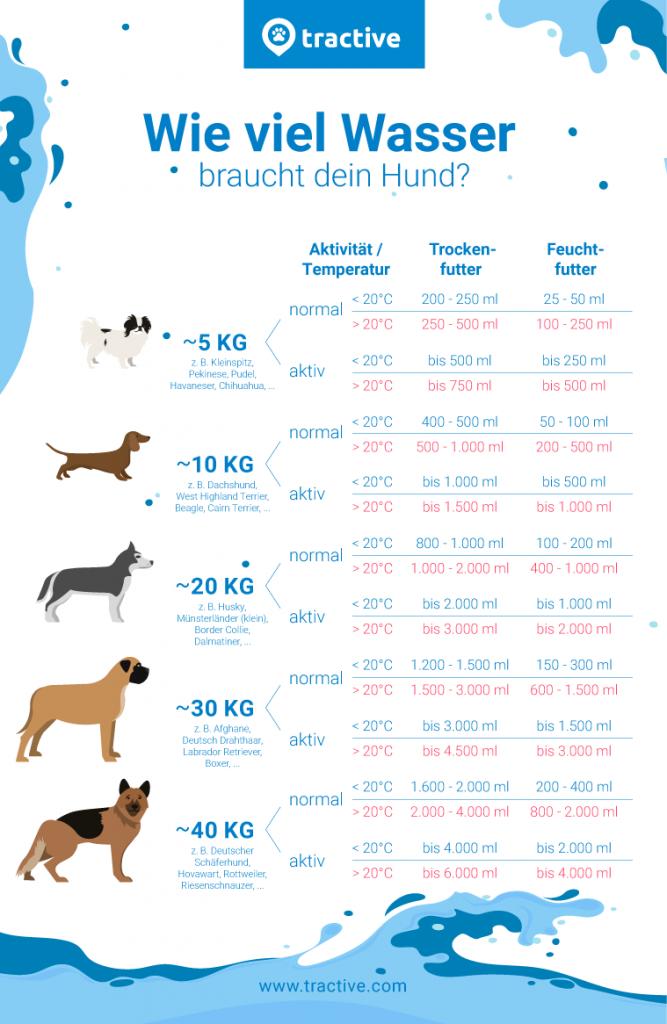 We viel trinkt ein Hund am Tag - Übersicht zum Trinkbedarf von Hunden