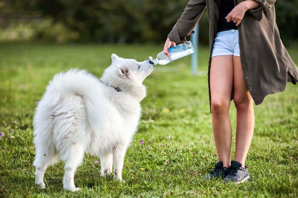 Wie viel trinkt ein Hund am Tag - Übersicht zur Flüssigkeitszufuhr