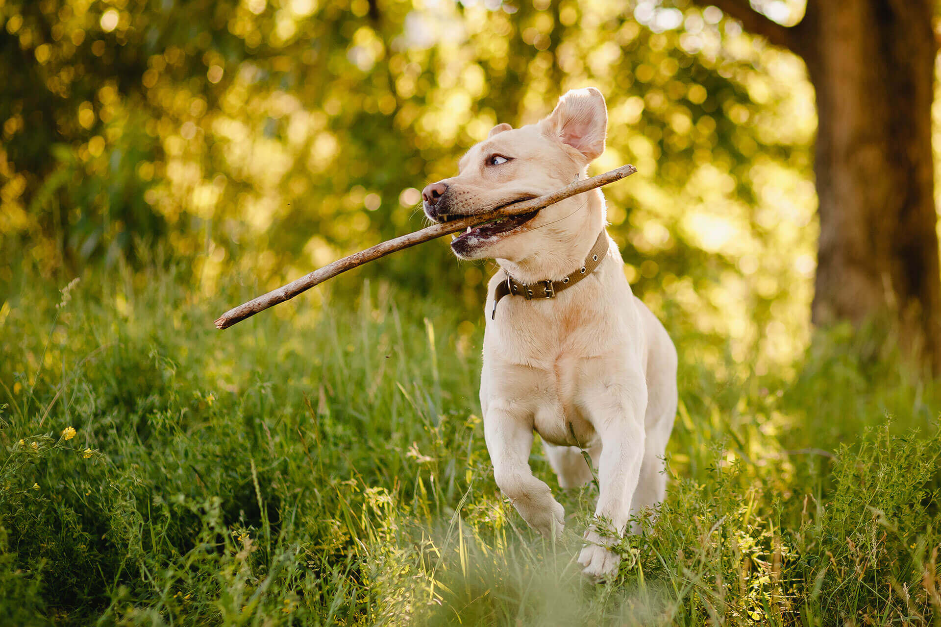 How to increase your dog's motivation? Here are 4 ideas that work!