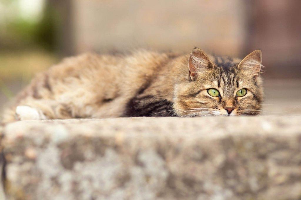 Entlaufene oder herrenlose Katze: finde es heraus